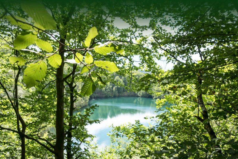 Blick durch Bäume auf einen blauen Waldsee in der Nähe vom Ferienhaus Hanfbachhaus. Naturerlebnisse beim Waldbaden mit RobinWoods.